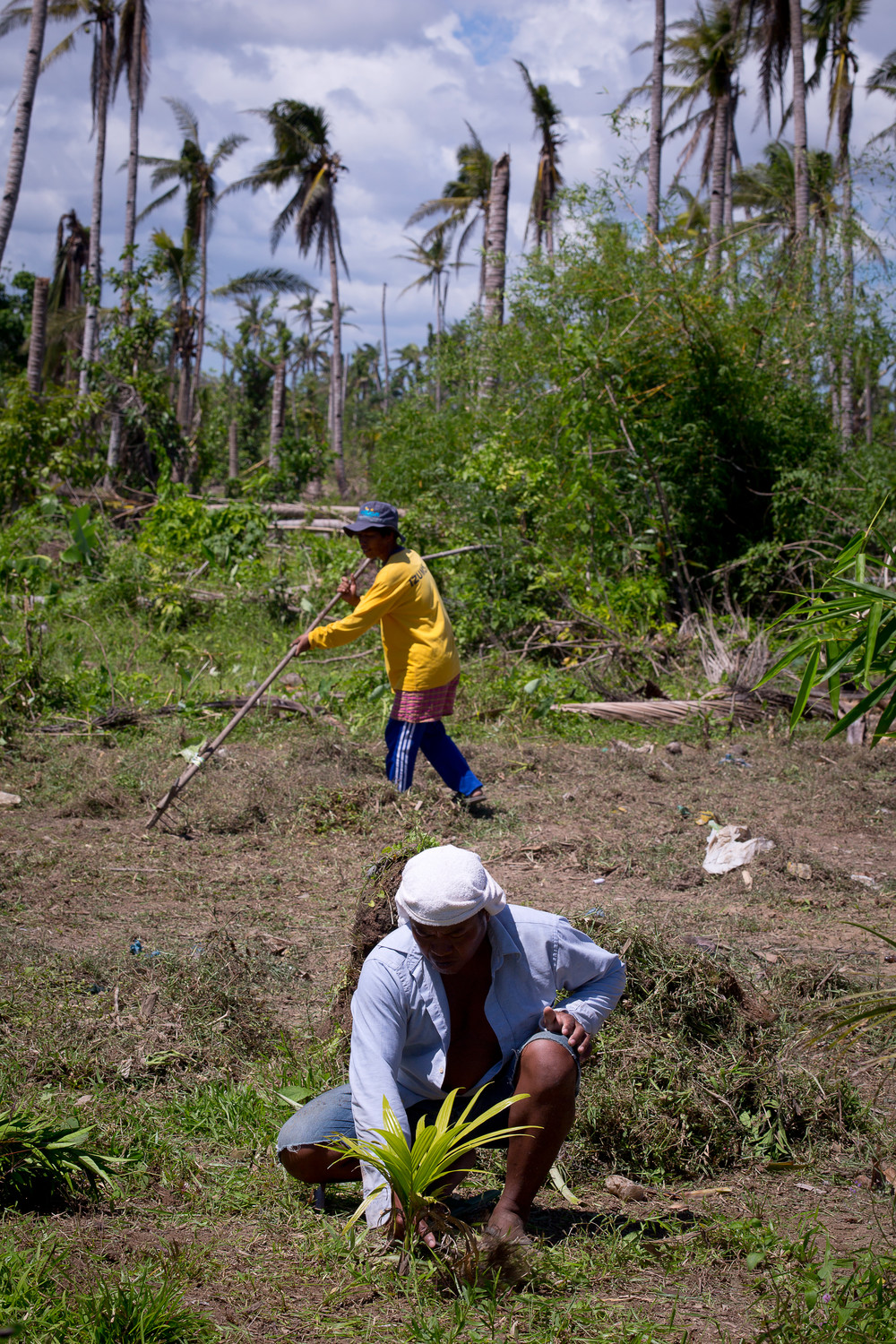 In this 2014 file photo, coconut farmers near Tanauan, Philippines, plant a sapling and clear a field. To date, the social action arm of the Catholic Church has been able to help about 1.8 million people affected by the destruction brought by Typhoon Haiyan that struck the central Philippines in 2013.