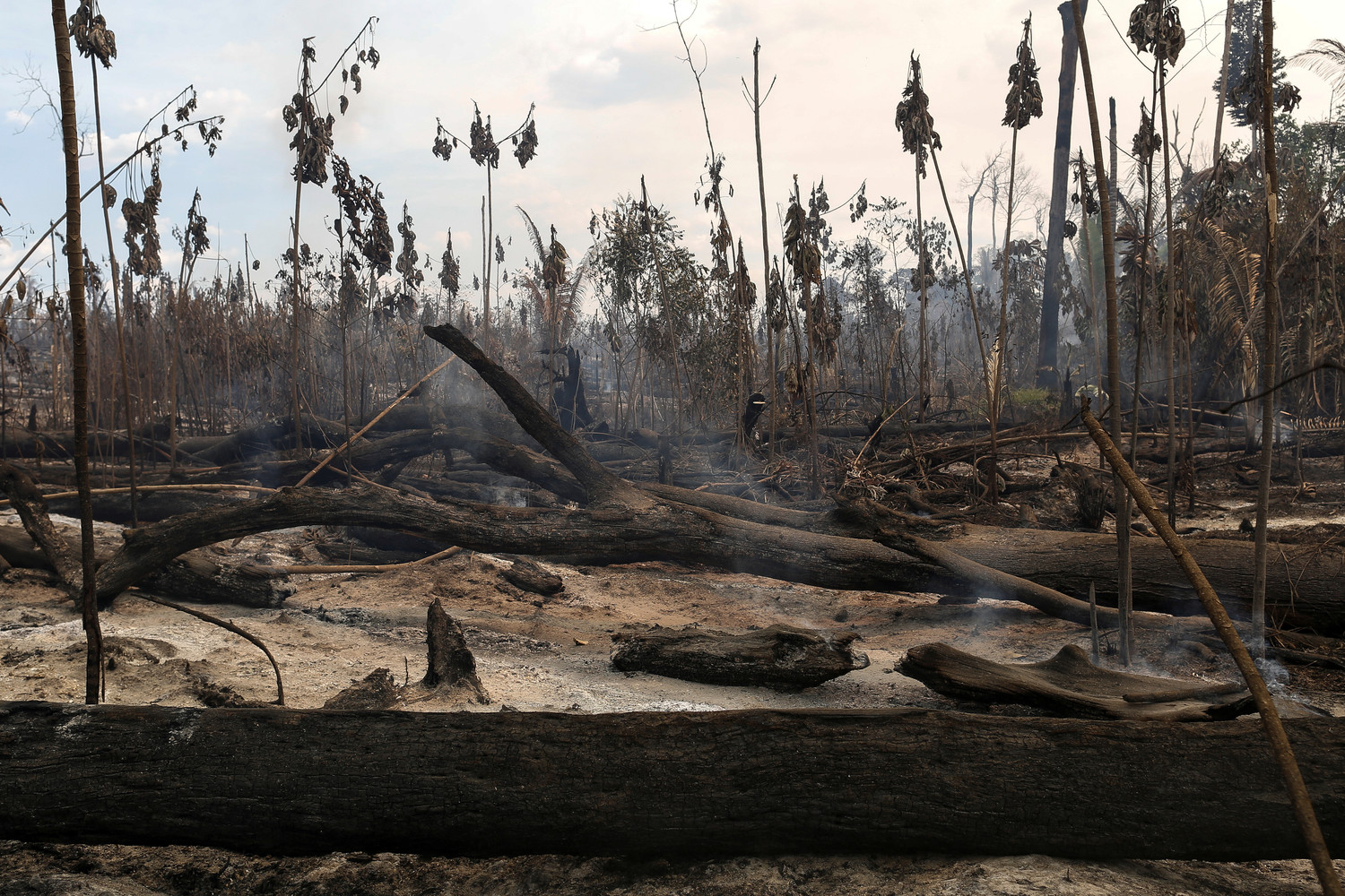 "A burned area in a forest is seen in 2017 during ""Operation Green Wave,"" conducted by agents of the Brazilian Institute for the Environment and Renewable Natural Resources, or IBAMA, to combat illegal logging in Apui, Brazil."