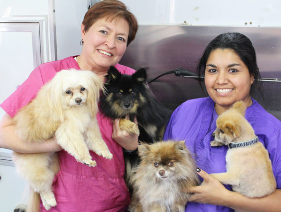 Scrub A Pup Tub Brings Mobile Dog Grooming To Fort Stockton