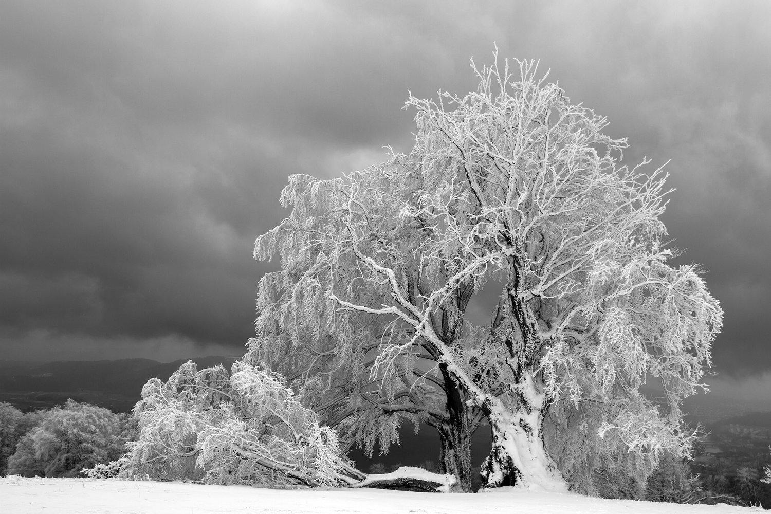 Stay safe and prepare now for weekend's winter storm; PUC and Red Cross offer advice