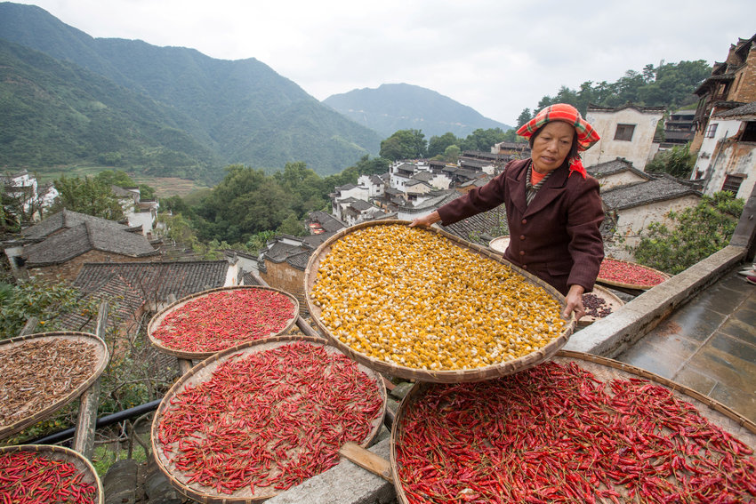 A farmer dries crops in Wuyuan, China, Oct. 14, 2017. Pope Francis condemned food waste May 18, telling members and volunteers of the European Federation of Food Banks that throwing away food is like throwing away people.
