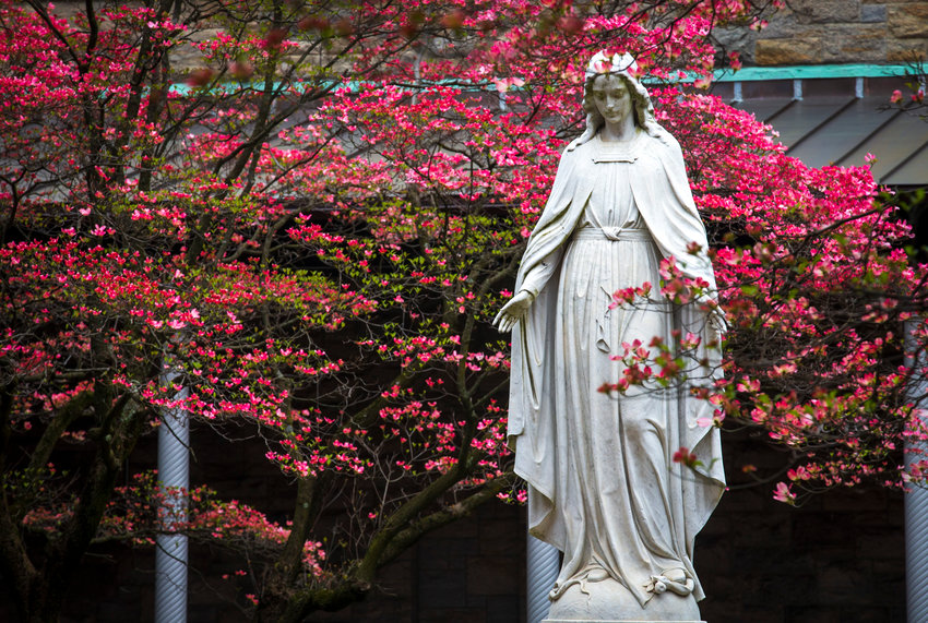 A statue of Mary is visible among the vivid spring buddings May 1, 2019, at St. Joseph's Seminary in Yonkers, N.Y. The U.S. and Canadian bishops announced April 23, 2020, they will consecrate their nations to Mary during the coronavirus pandemic May 1.