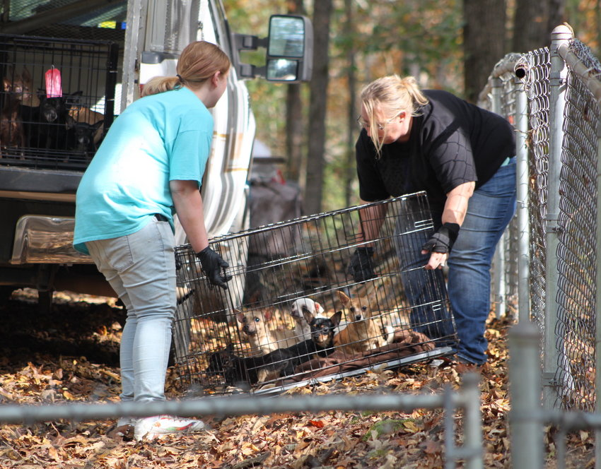 Animal Control Director Lisa Gowens, right, and Tori Yarber load dogs into a truck for transportation to a safe facility.