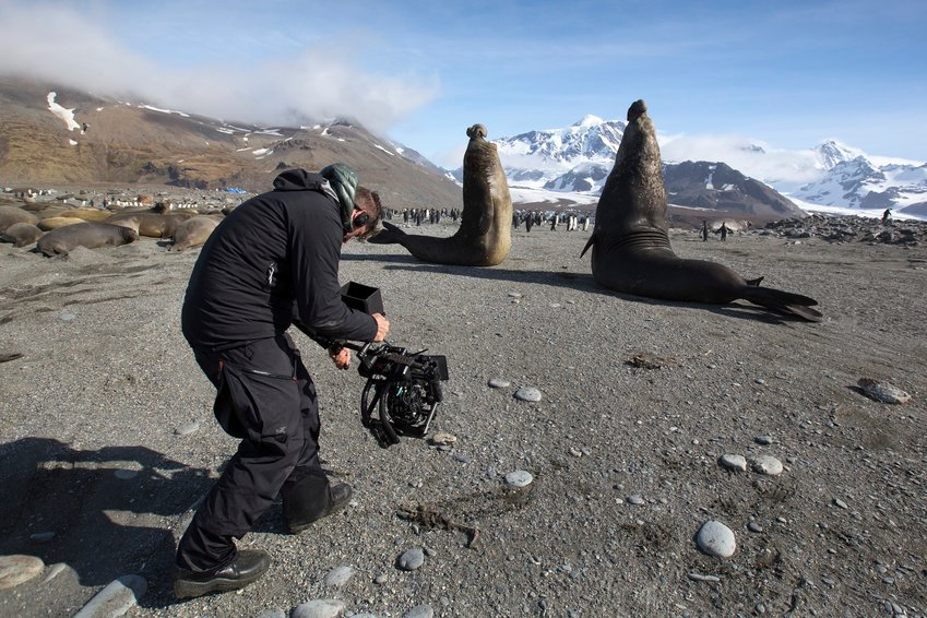 Cameraman Mark MacEwen captures a battle between two four-ton bull Elephant Seals. When the loser decides to retreat, it does so as fast as it can, and the film team had to make sure to get out of the way to avoid being trampled.