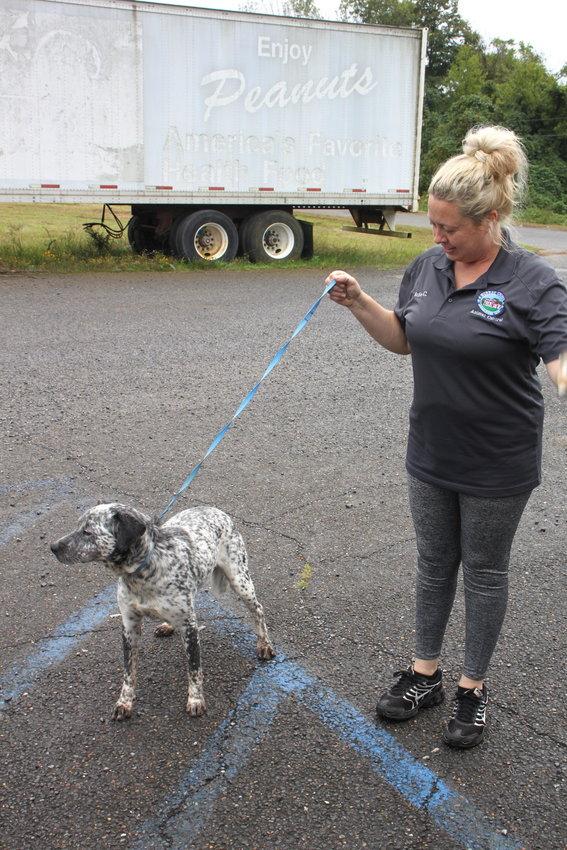 Animal Control officer Julie Caylor takes Cowboy, a blue heeler mix, for a short walk on Monday.
