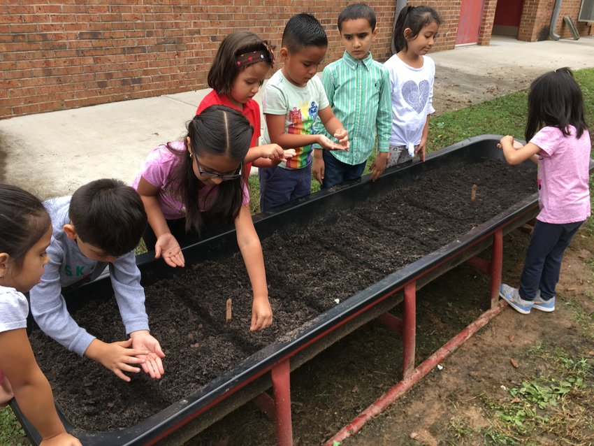 ESOL students at White Elementary plant seeds in the vegetable beds they prepared last fall.