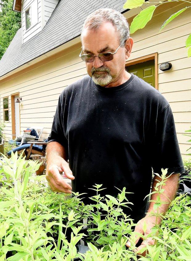 Bartow County Master Gardeners President Jim Humphreys inspects some of the many young plants in the backyard of his Euharlee home.