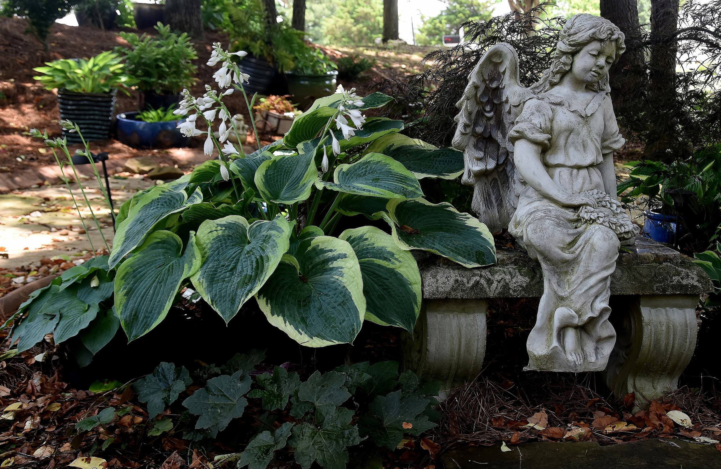 Ken and Curlette Hennard's gardens feature a variety of flowers and plants with artistic accents.