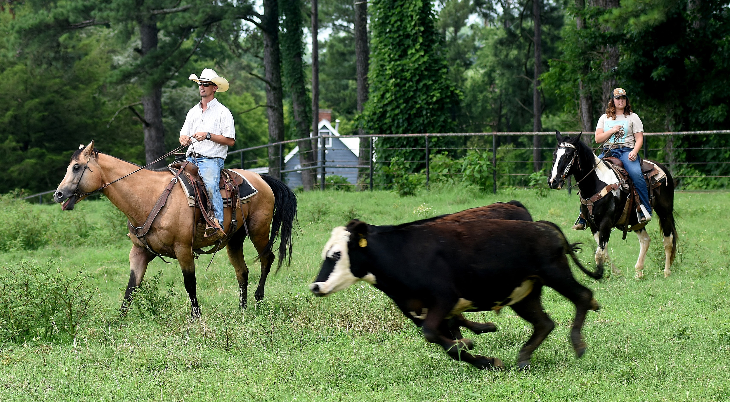 Jonathan and Jessica Watkins manage their herd of cattle.