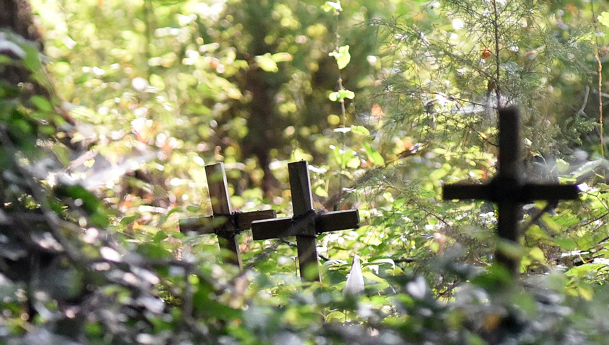 Hundreds of small wooden crosses, each representing a grave, protrude above the ground and foliage of the Black Pioneers Cemetery in Euharlee.