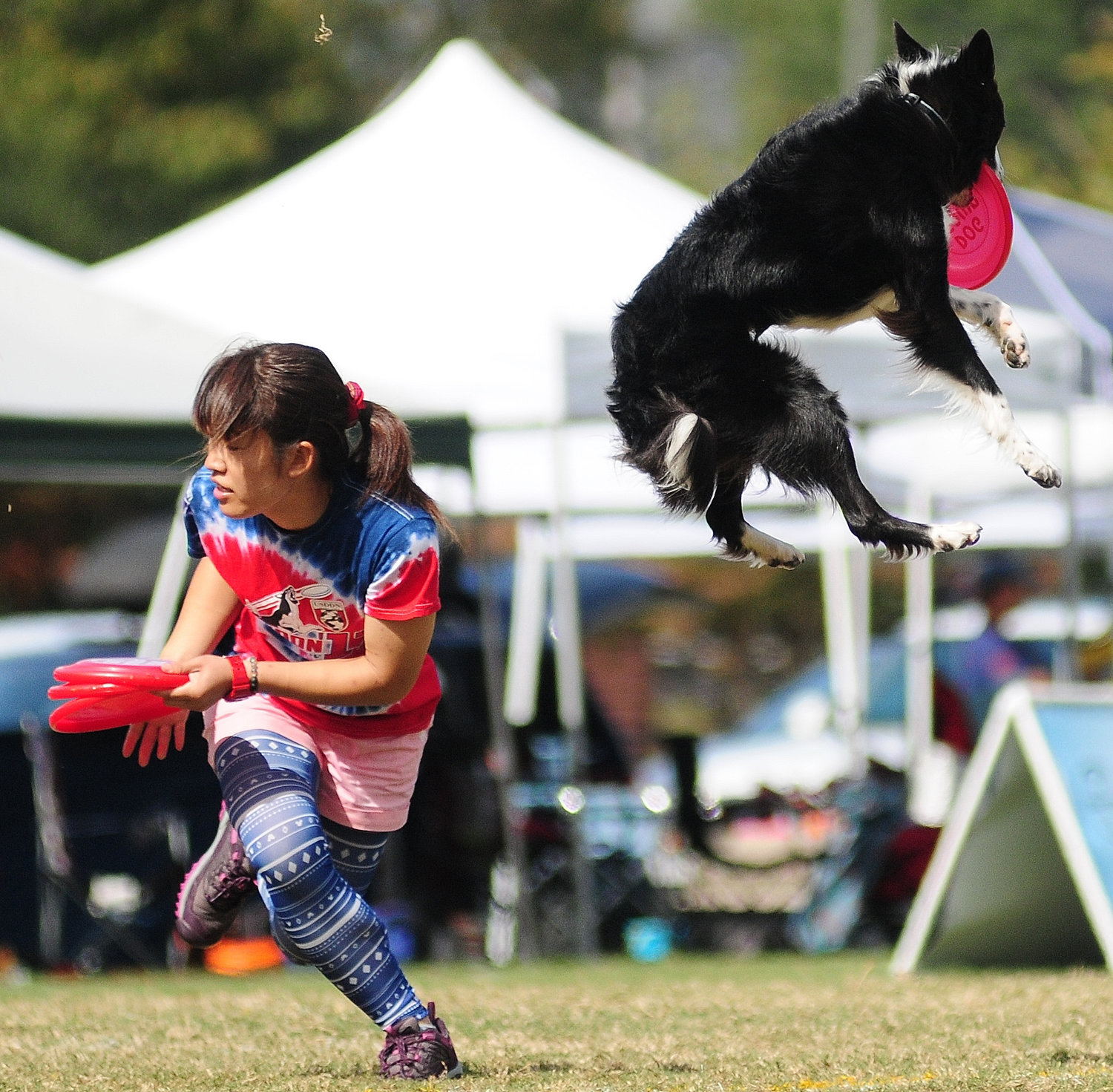A canine competitor leaps in the air last year at the United States Disc Dog Nationals World Finals in Cartersville.