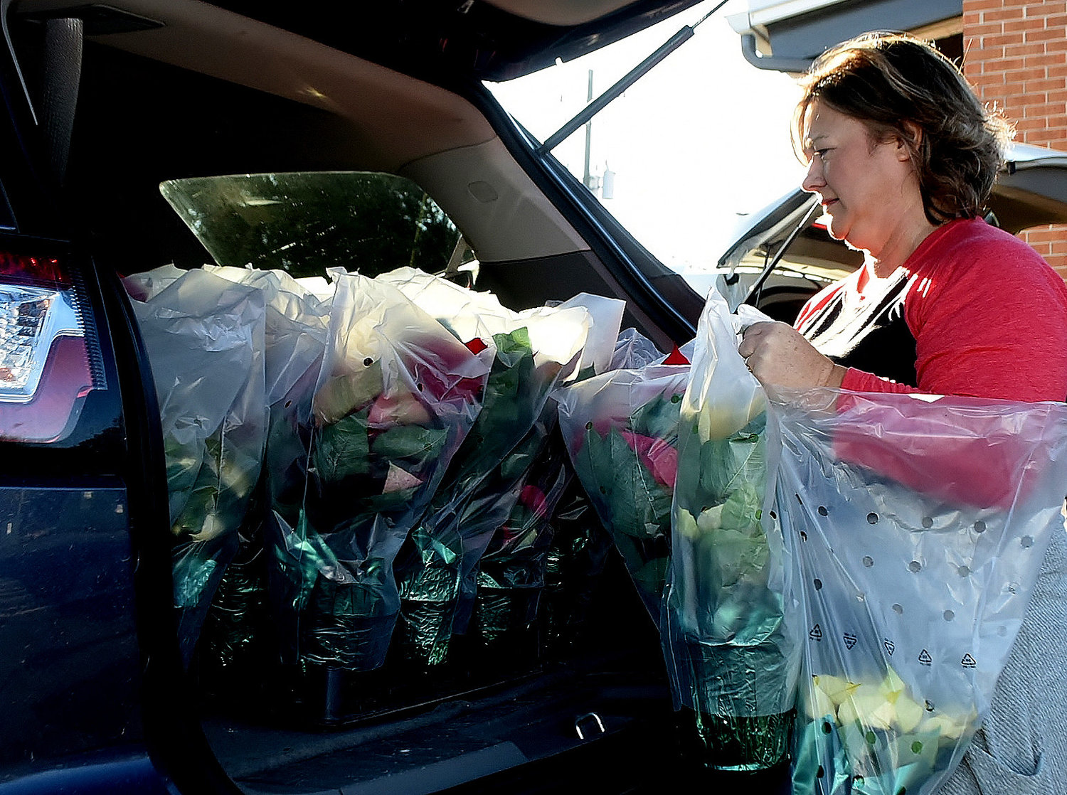 Cartersville Service League member Michelle Martin loads poinsettias into her car for delivery.