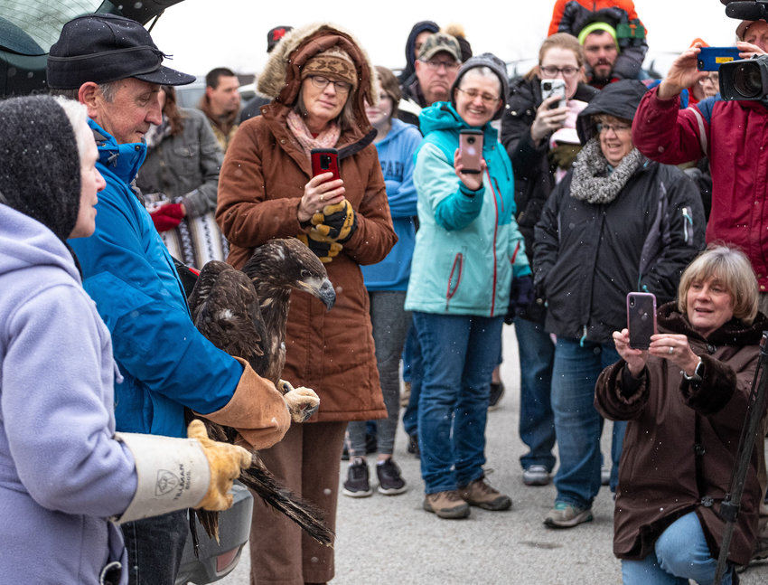 Around 200 visitors watched and took photographs of the juvenile bald eagle that was released into the wild Sunday at DeSoto National Wildlife Refuge.
