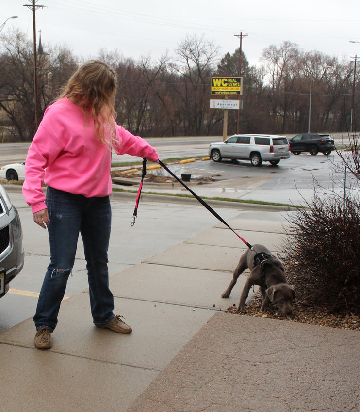Holstein Veterinary Clinic has been operating curbside since the beginning of the pandemic.