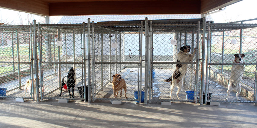 Several dogs at the Jeanette Hunt Blair Animal Shelter were surrendered back due to various reasons.