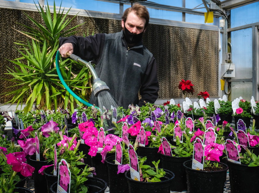 Blair High School student Skyler Puffer waters containers of flowering plants in the BHS greenhouse. BHS will host its annual plant sale May 1 and May 4-5...