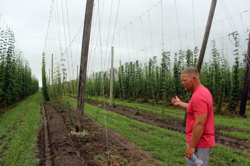 Josh Christensen, owner of Christensen Hops Farm, guides a tour through his hops crops Saturday morning. Christensen said he started out with around half an acre of hops, and in its four years of production, the farm has expanded to six acres.