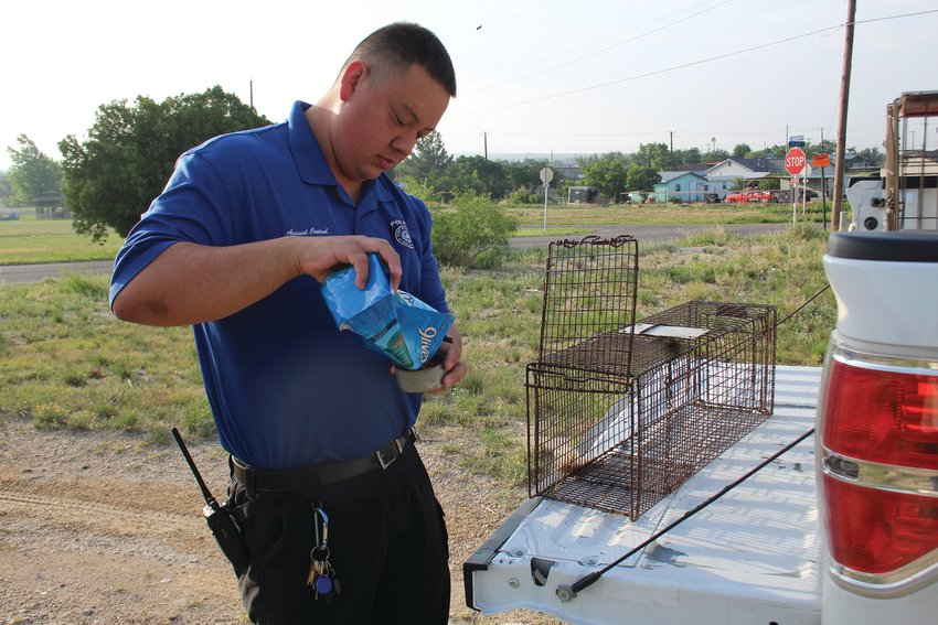 Animal Control Officer Alexis Olivares sets a cat trap at a property after the residence reported a problem.