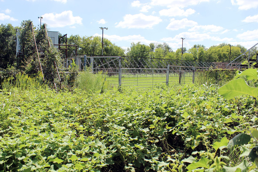 The Madisonville Sidewalk Cattlemen's Association rodeo arena has become overgrown, and organizers are looking to tear it down.