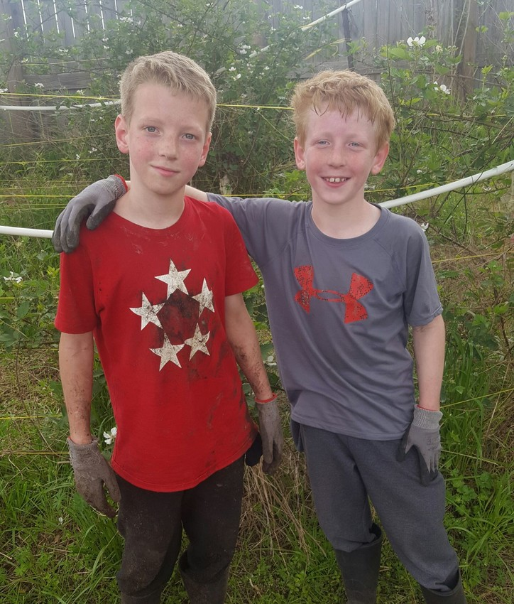 Micah (left) and Evan (right) Basinger got to work at 4:30am to help Sweet Pickins Blackberry Farm save their crop.