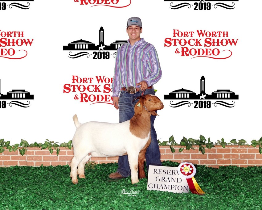 Shepherd Creek Ranch in North Zulch captured Reserve Gran Champion Purebred/Fullblood for their goat Nasty Habit at the Fort Worth Stock Show & Rodeo.