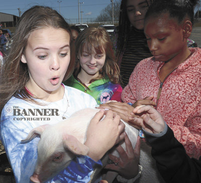 Angleigh Rutherford holds a baby pig from Tosh Farms of Henry.