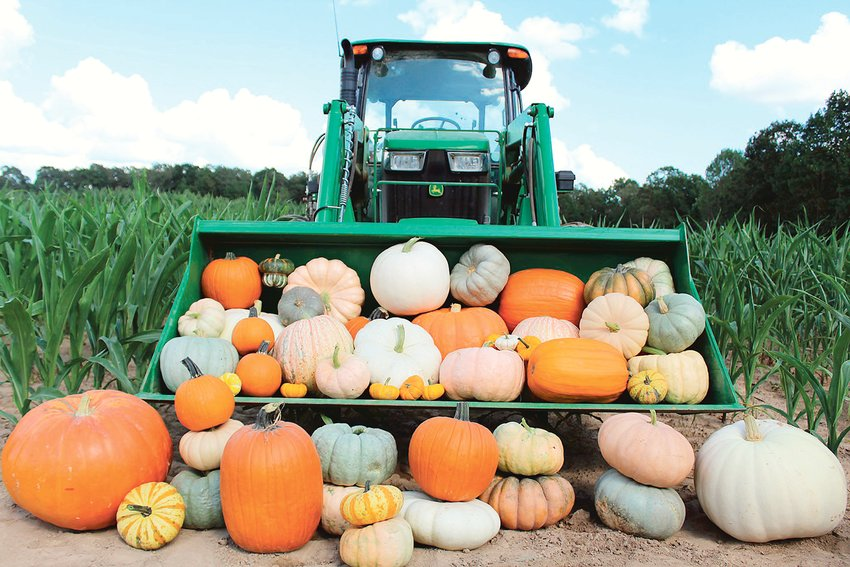 McKenzie Farm & Forest will have a pop-up pumpkin patch at Pat's Archery and Outdoors today from 8 a.m. to noon.
