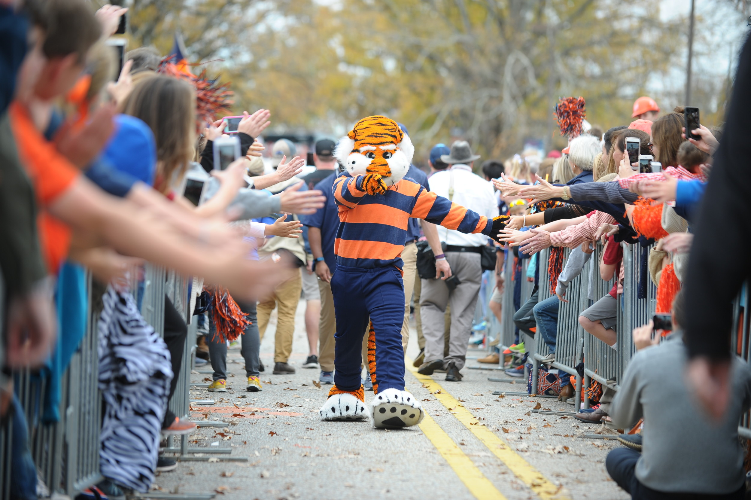 Aubiie interacts with fans during Tiger Walk prior to  Saturday's game, at Jordan-Hare Stadium.