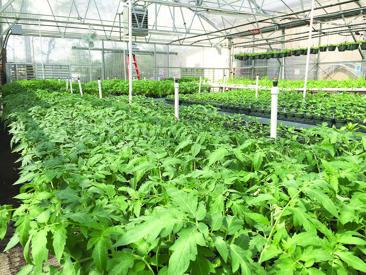 The Walker County Center of Technology FFA will hold its Spring Plant Sale April 9-May 11, Monday through Friday, from 8 a.m. until 3 p.m. each day. A variety of vegetables, flowers and herb are available for purchase, including Better Boy and Big Boy tomatoes, Big Colossal Green Bell Peppers, Hot Jalapeno Pepper, Basil, Sweet Potato Vines, Easy Wave Petunias, Coleus and more. All proceeds from the sale are dedicated to improving the WCCT student's agricultural educaiton. The Walker County Center of Technology is located at 1100 Viking Drive in Jasper. For more information, call 205-387-0561.
