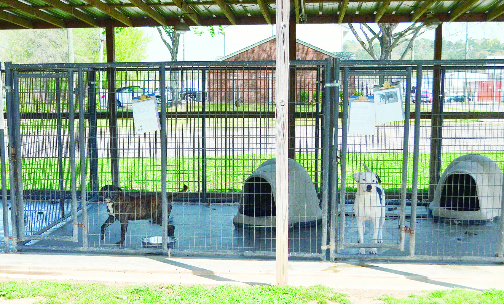 Pictured are dogs waiting for their forever homes at the Jasper Animal Shelter.