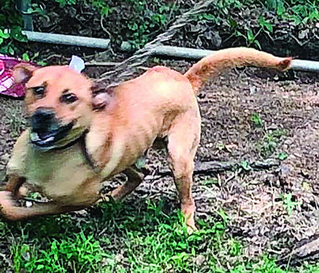 Police are still searching for the malnourished dogs in this case.