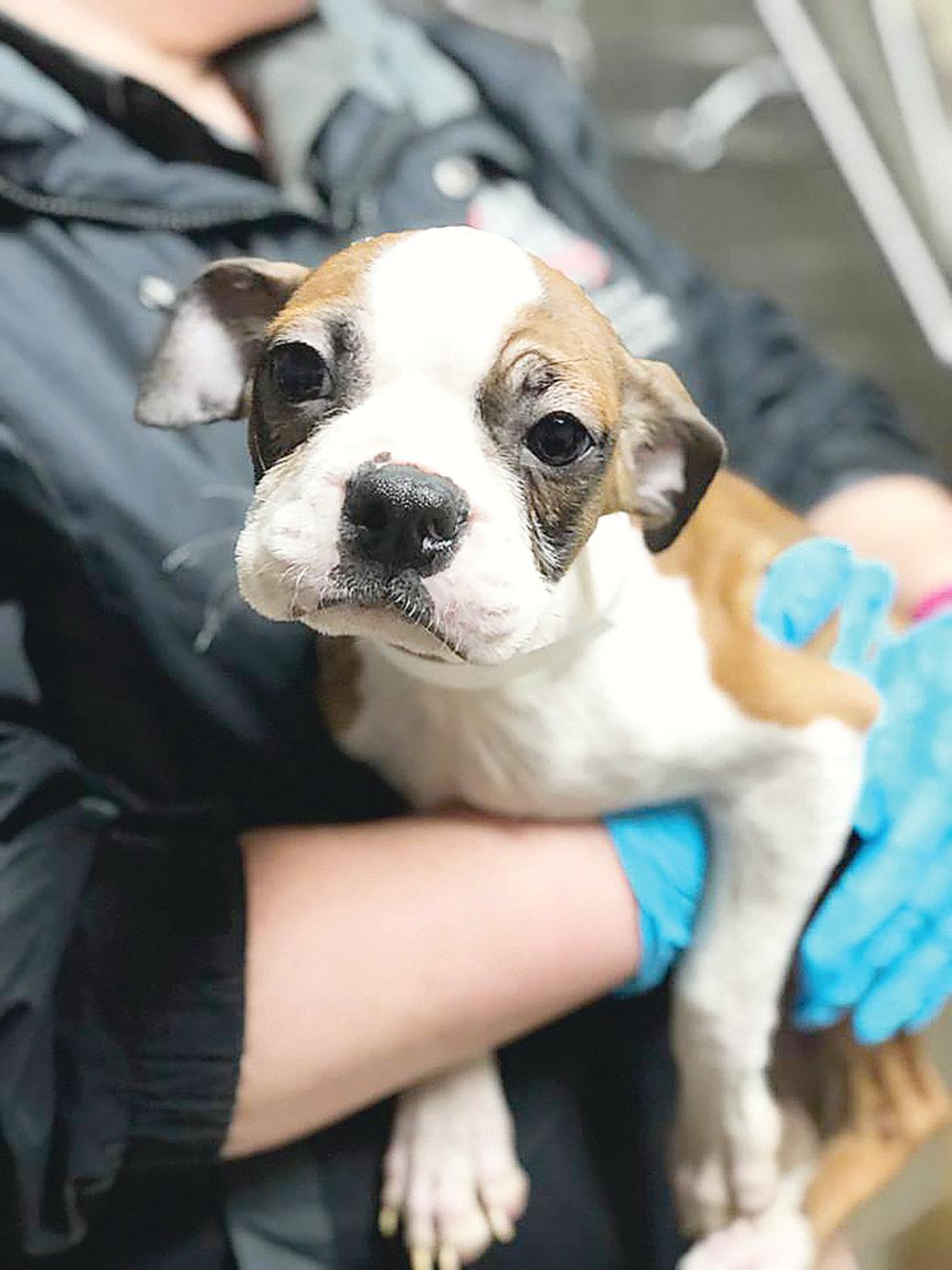 Alleged puppy mill found in Nauvoo