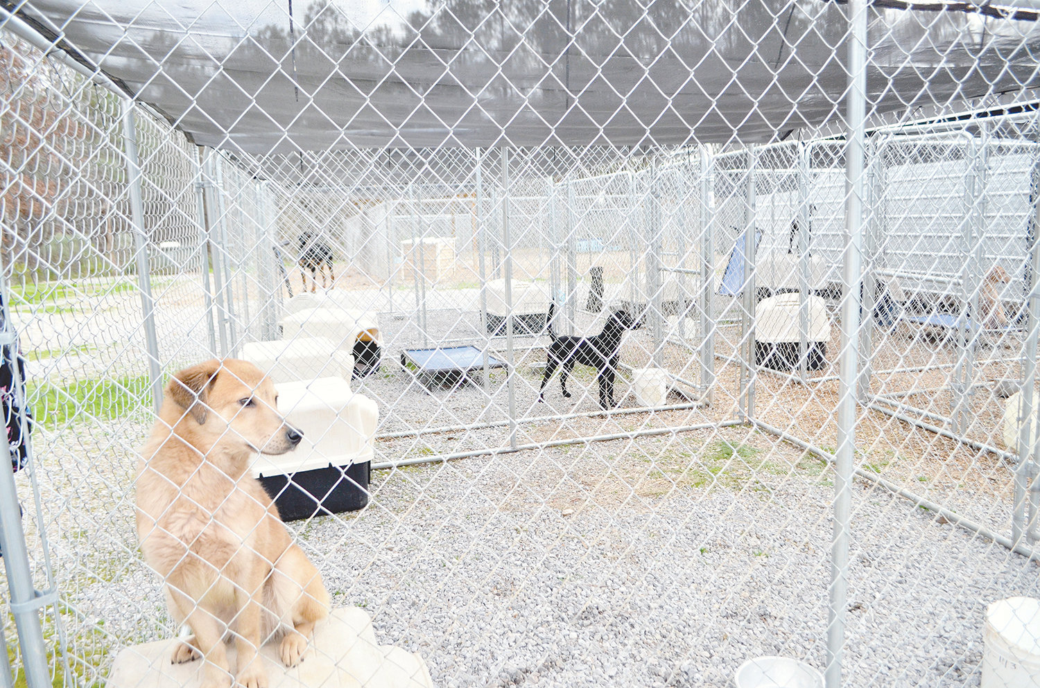 Shown are dogs who survived their greatest battle — distemper. They are available for adoption at the county's animal shelter, which reopened Tuesday.