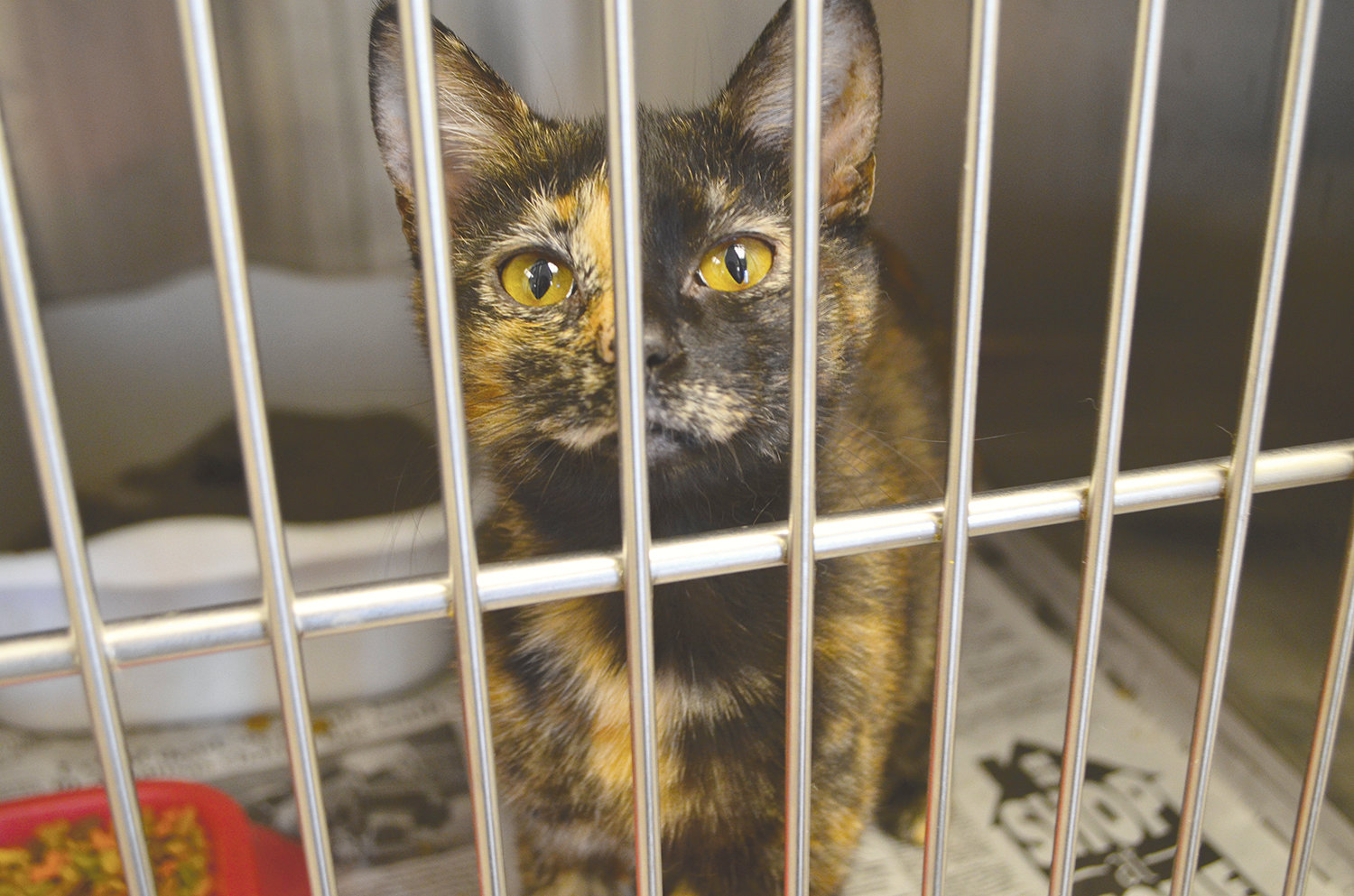 Around eight cats are available for adoption at the county's animal shelter.