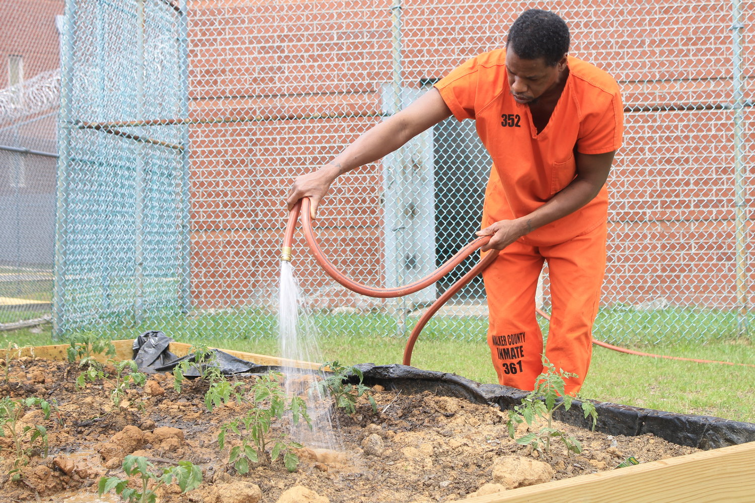 Kelvin Dixon waters tomato plants at Walker County Jail on Tuesday. Members of Desperation Church helped install nine raised bed gardens in a fenced area behind the jail during Passion Week. A variety of tomato and pepper plants were planted this week.