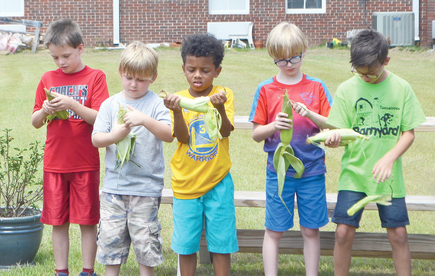 Children learned to shuck corn at Carbon Hill Elementary on Tuesday.