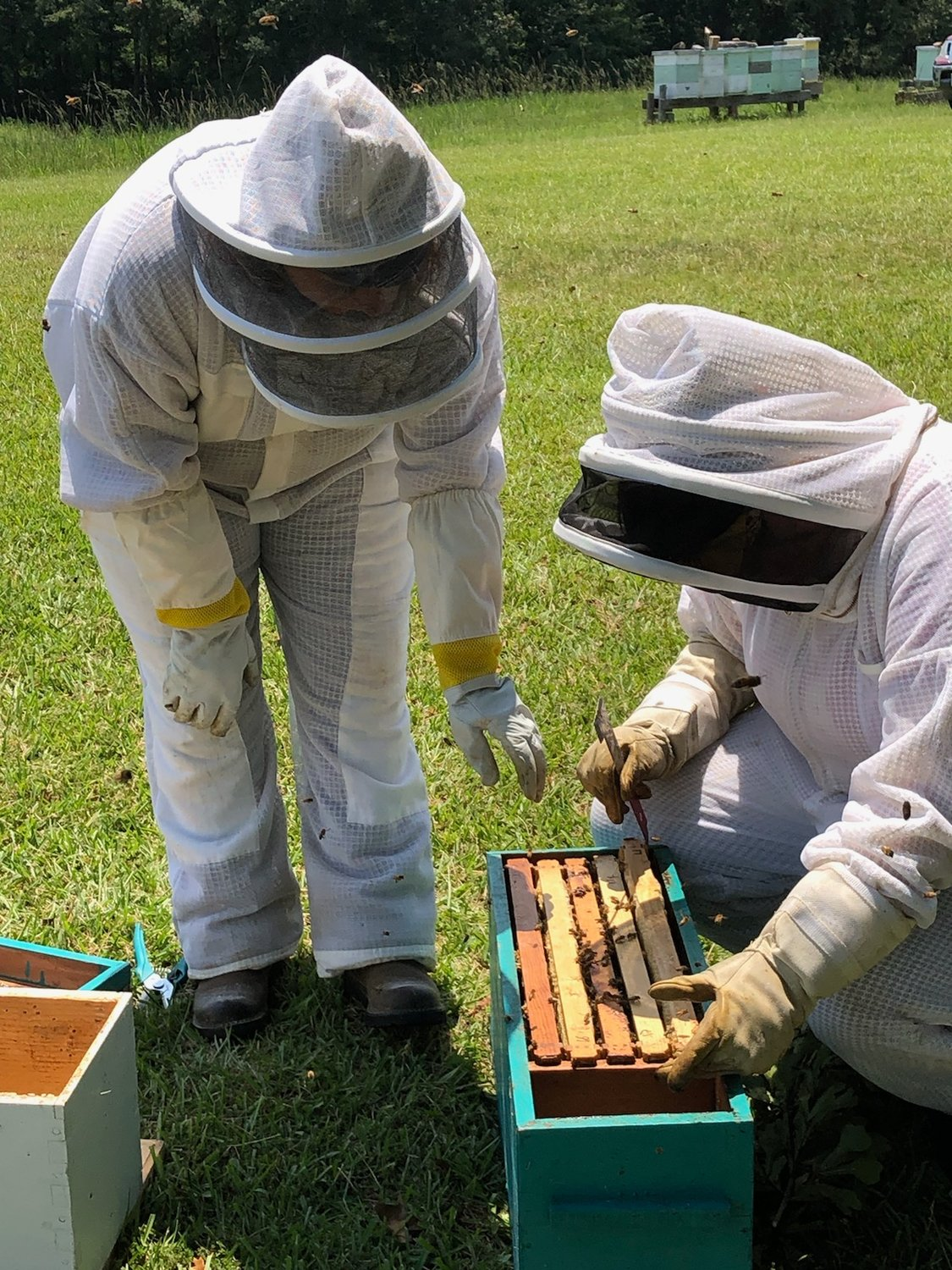 Hope For Women Using Beekeeping Daily Mountain Eagle