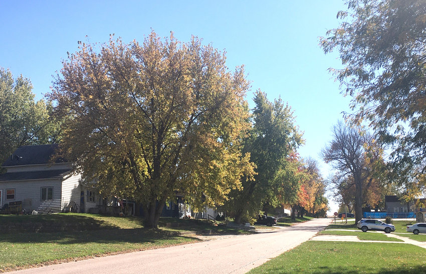 This is a picture of Charter Oak's Main Street. Charter Oak recently received a grant from the Iowa DNR for 200 trees. The town could lose 90% of its Ash trees in the next few years to come due to Emerald Ash Borer.
