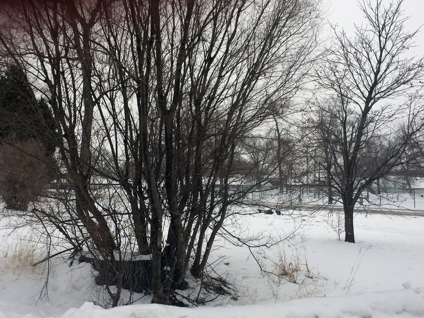 Trees that sit in the City right-of-way in the Willow Park neighborhood will be downed before construction begins on streets and ditches, though the current weather may may not be ideal.