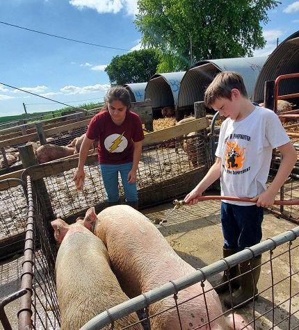 Marlin Garcia-Sandoval and Blazen Beermann washing a couple pigs.