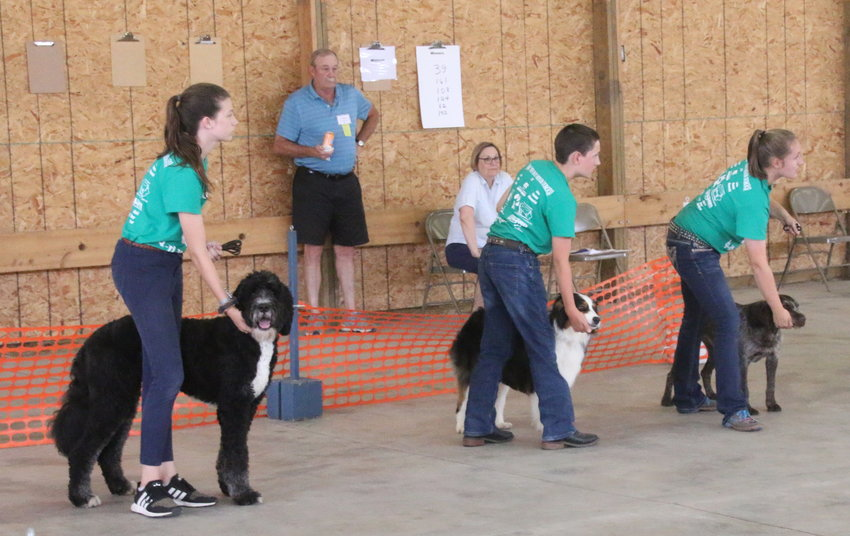 Madelyn Lee, Owen Powell and Lauren Wall show their dogs during the 4-H Dog Show at the Mississippi Valley Fair.