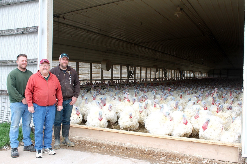 The Daufeldts, from left, Brian, Don and Brent amid a sea of turkeys at their farm near West Liberty.