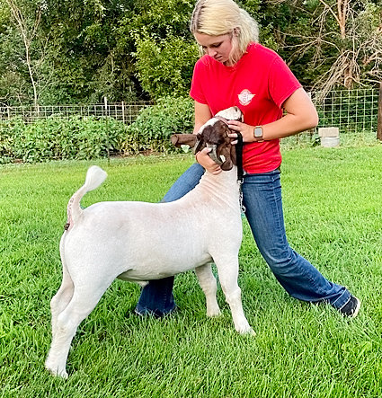 North Scott junior high student Jordan Jones will show meat goats for the first time.