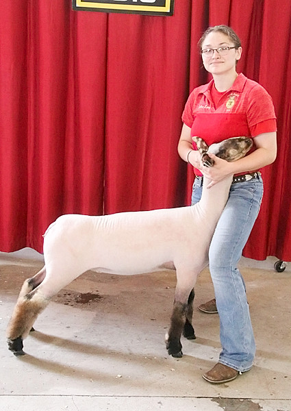 Caelan Long showed the Champion Speckled Face Ewe, and also the Champion Market Pair of Ewes.