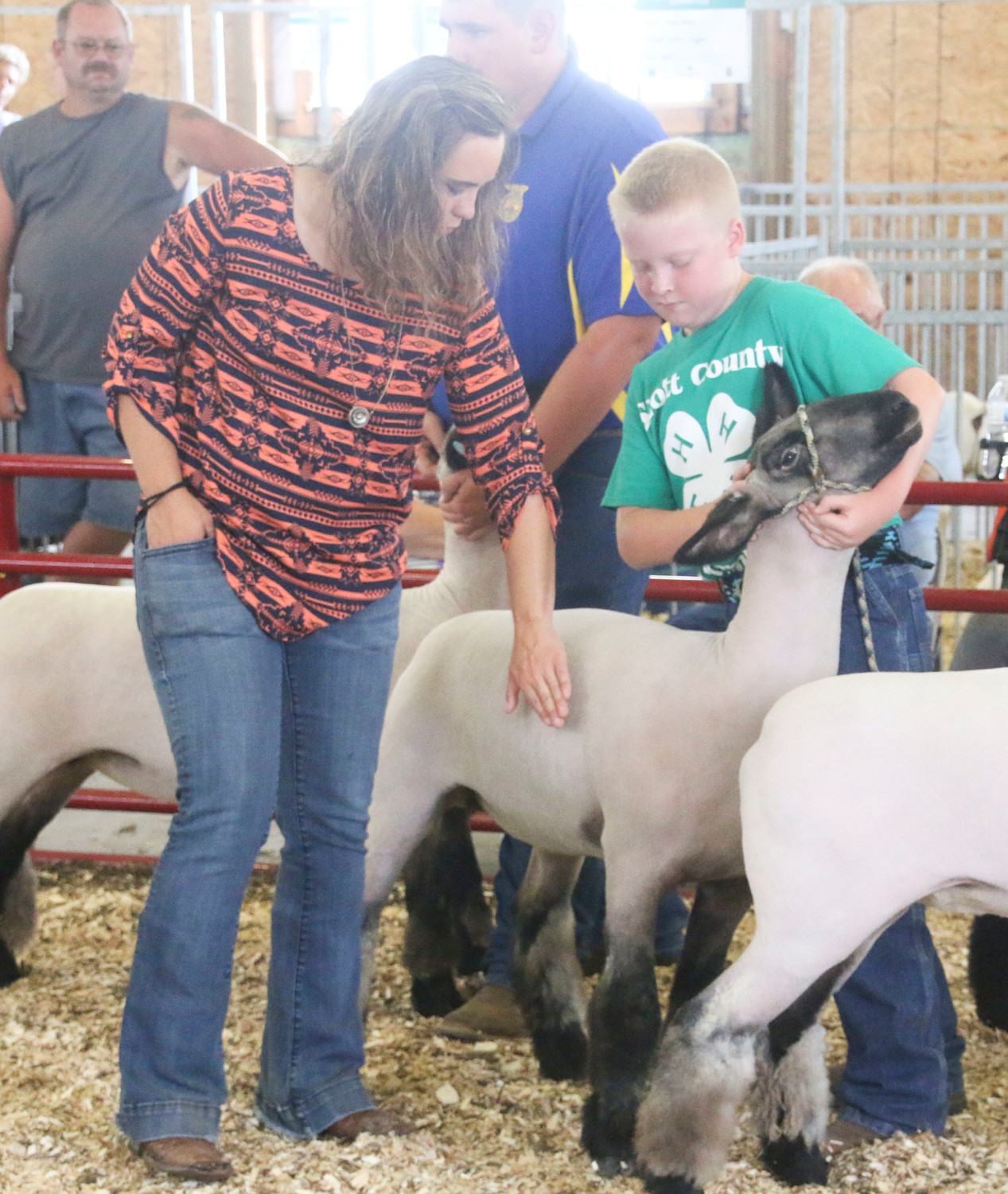 Judge Ashley Wiebe examines Forrest Bernet's sheep.
