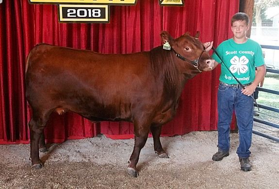 Nathan Musal showed the Champion Red Angus.