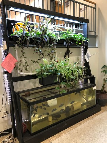 This is what West Liberty High School's new fish growing project might look like