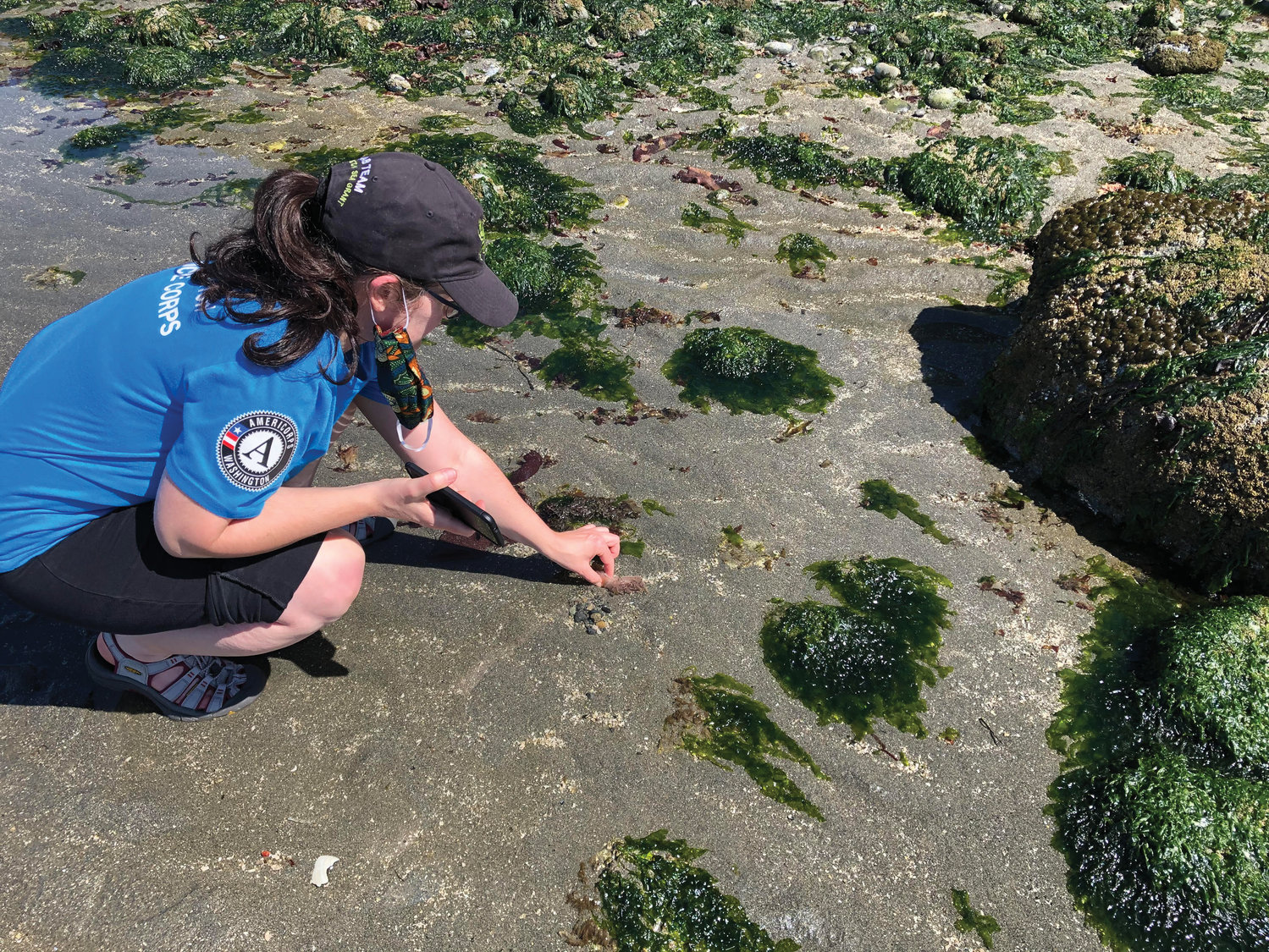 Heather Conkerton, Americorps aquatic reserves monitoring and stewardship coordinator for RE Sources, uses the iNaturalist app to identify marine species at Point Whitehorn Marine Reserve.
