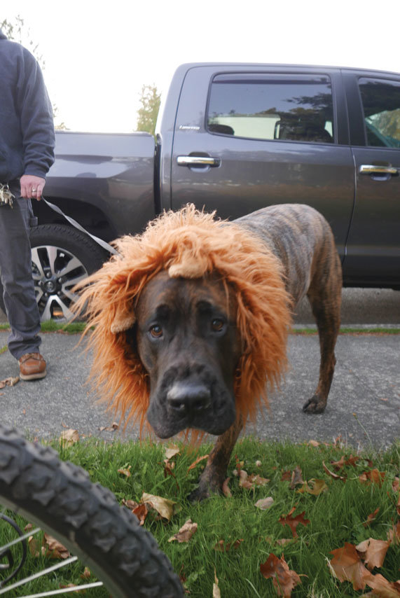 Most who showed up to the Freeman Halloween celebration came in costume, dogs included.