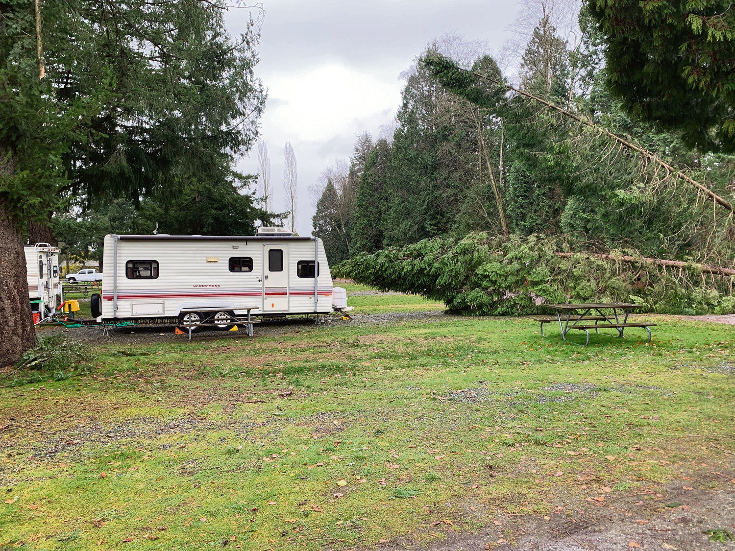 The wind storm on November 17 knocked over numerous trees at Thousand Trails Birch Bay RV campground.
